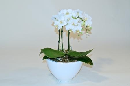 Orchidee in bijpassende kom