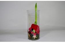 Amaryllis op glas